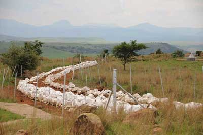 British Mass Graves - Spionkop 1900